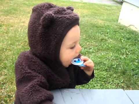Wild Bear Found In Winslow Maine!