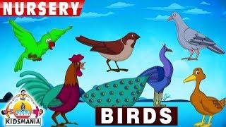 Birds Name In English
