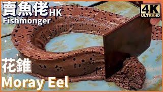 【賣魚佬 4K】生劏 大花錐油錐 血腥慎入 【Fishmonger 4K】 How To Fillet Highfin Moray Eel 巨大きな魚 漁民海鮮 西環魚王