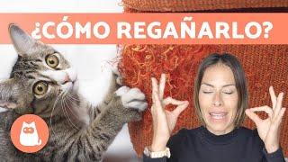 Cómo REGAÑAR a un GATO correctamente ✅ (Educación Felina)