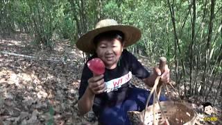 100塊錢一斤的紅菇,純野生而且好看,小六摘了一籃賺到了100 yuan a catty of red mushrooms