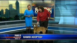 LOL: Dog creates 'awkward' moment with FOX 5 anchor