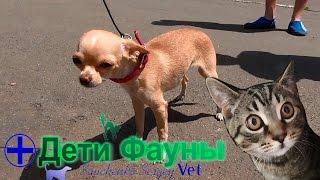 Перелом у собаки. История болезни