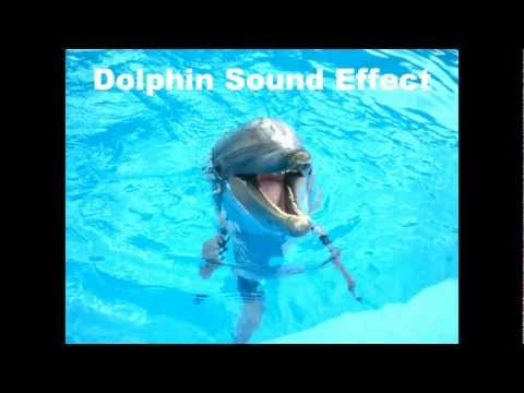 Dolphin Sound Effect
