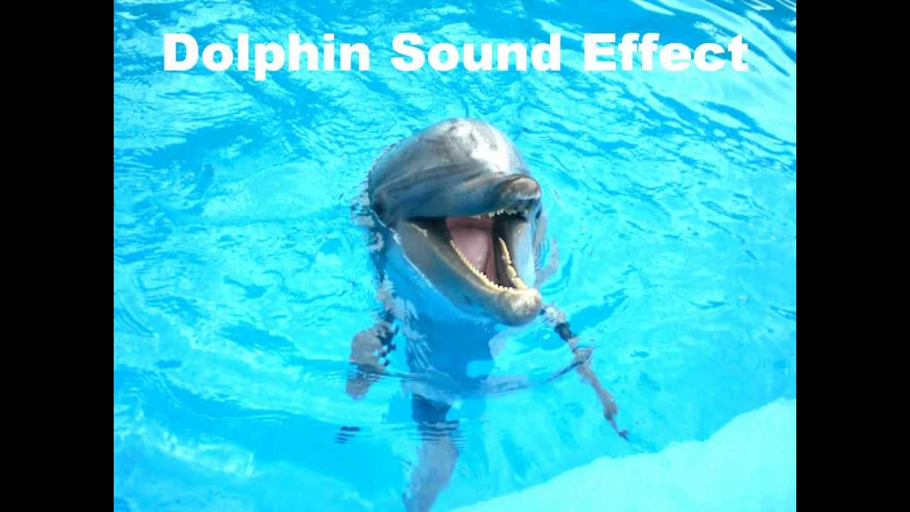 Dolphin Sound Effect - YouTube