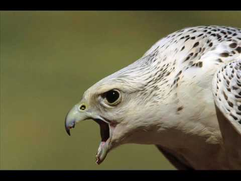 Top ten fastest birds in the world   YouTube