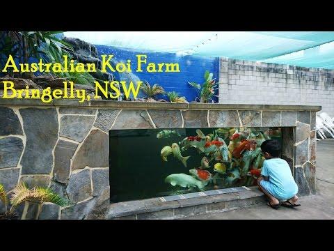 Australian KOI Farm - Visit Australia