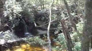 Florida Trail - Panhandle Chapter - Econfina