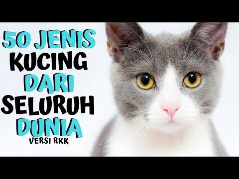 [CATS INFO] 50 Jenis Kucing Dari penjuru Dunia VERSI RKK CAT HOUSE
