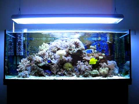 My Simple 300 L Reef Tank Money Isn T Everything