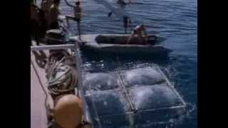La Collection Cousteau 69/90 - Les requins (1967)