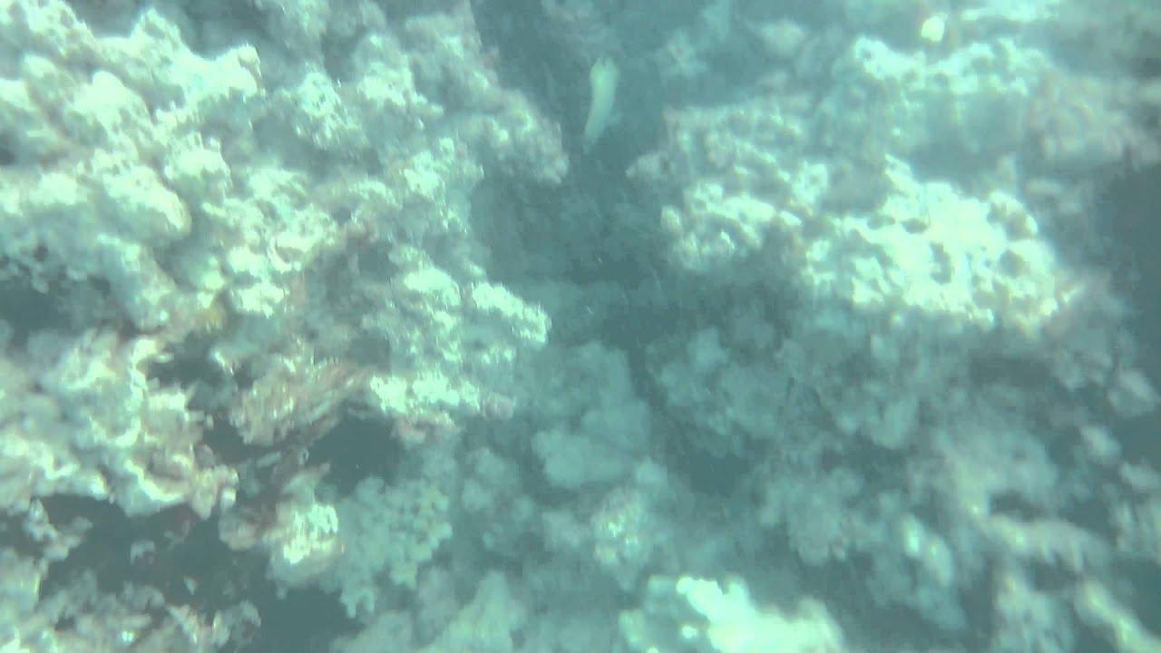 Lanikai Beach Snorkeling Fish Coral Murky Low Visibility Kailua Oahu Hawaii