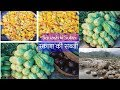 Squash ki Sabzi - Indian Vegetarian Recipe-assam special-chayote recipes