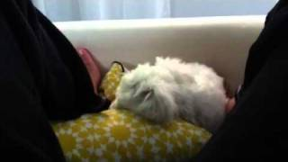Video Irritated puppy download MP3, 3GP, MP4, WEBM, AVI, FLV Desember 2017