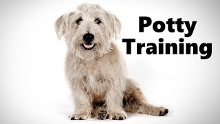 How To Potty Train A Glen Of Imaal Terrier Puppy - Training Irish Glen Of Imaal Terrier Puppies