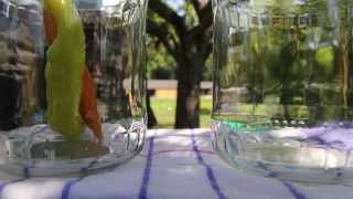 Cityfarm SchÖnbrunn   |    Ab Ins Glas: Pesto, Chutneys & Co