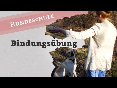 Bindungsübungen Hund Blickkontakt Aufmerksamkeit Bindung Übung + Outtake / Welpe Balljunkie