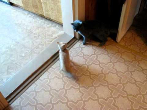 Вопрос: Как оградить кошку-мать от посягательств кота-сына?