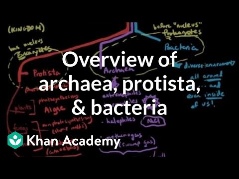 Overview of Archaea, Protista, and Bacteria | Cells | MCAT | Khan Academy