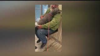 Local lost dog reunited with owner after 7 months