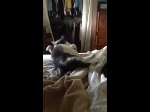Weeee weeee weeee love our kitty, Karaoke