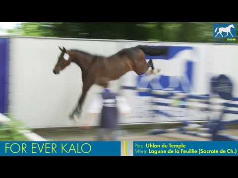 FOREVER KALO