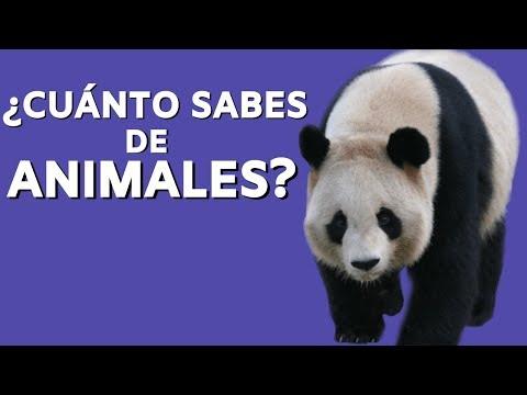 100 Preguntas de Animales [y sus Respuestas] ¿Cuánto Sabes?🐼 from YouTube · Duration:  23 minutes 8 seconds