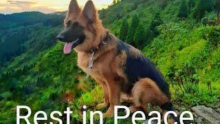 In the memory of Daisey German sheperd  Pet lovers Dog lovers  Mirik  Darjeeling  India 