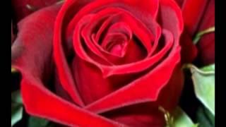 กุหลาบแดง 9,999 ดอกเป็นสื่อ มิตรภาพแห่งรัก 9,999 red roses as a fellowship of love .