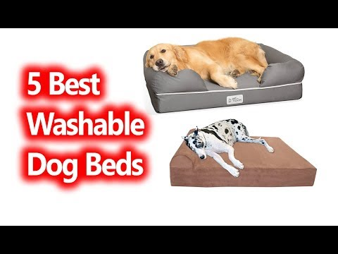 best-washable-dog-beds-buy-in-2019