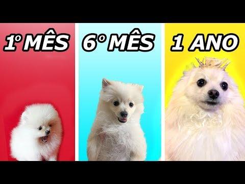 Evolução do meu cachorro Johny em 1 ano.............