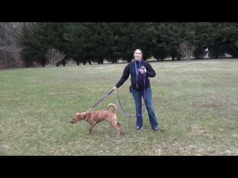 How To Introduce A Remote Collar To A Dog (and have them love it)