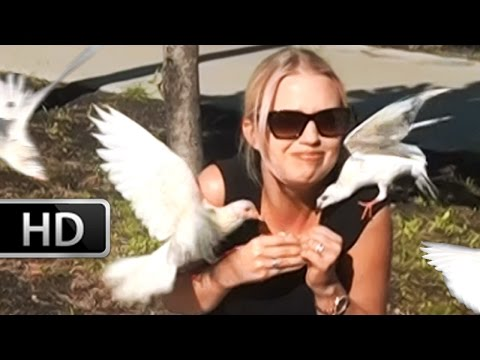 Girl Attacked by birds in Hawaii! (Outside Pearl Harbor museum on honalulu)