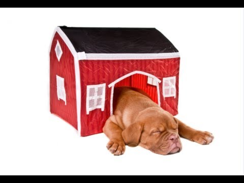 How To Build A Dog House