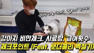 강아지 비만체크, 사료량, 급여횟수 체크방법 (Feat…