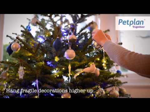 Petplan's tips for a happy and healthy Christmas with your dog