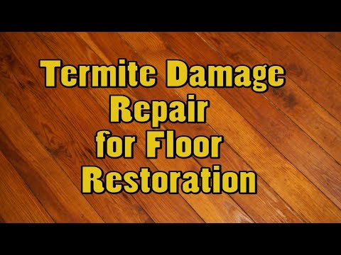 Damage Floor Laminate Termites Flooring Wood Or