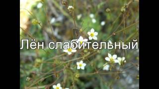 видео Красная книга Мордовии