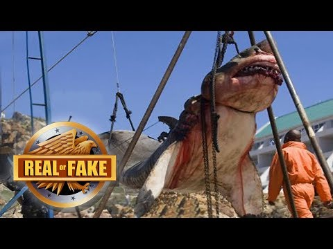 Real Or Fake? GIANT MEGALODON CAUGHT & More