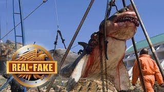 GIANT MEGALODON HOOKED BY FISHERMAN - real or fake