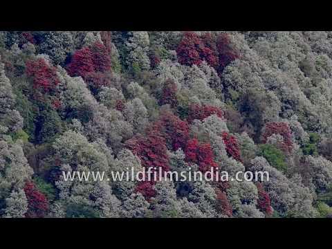 Wildfilmsindia prote