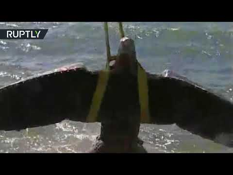 RAW: Giant Nazi eagle salvaged from WWII shipwreck goes on auction