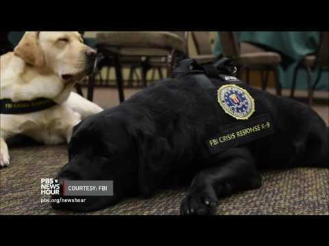 Meet the 'courtroom dogs' who help child crime victims tell their stories