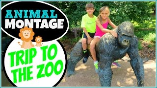 TRIP TO THE TOLEDO ZOO - ANIMAL MONTAGE