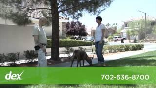 Gibson's Canine Classroom Dog Training Behavior Specialist