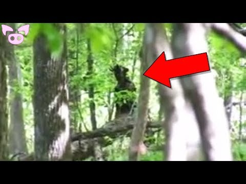 Paranormal Creatures Caught on Camera