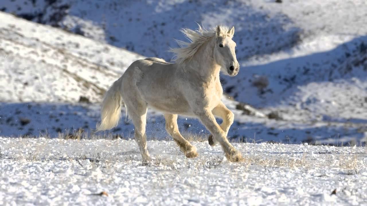 Лошадь — это поэзия в движении. - YouTube