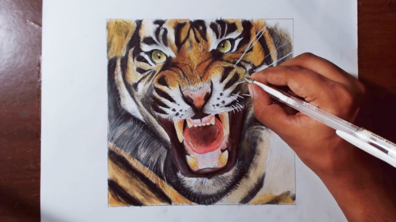 Tiger Face Drawing Color