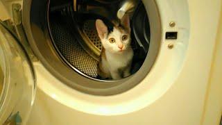 ШОК! Котенок в стиральной машине! Слабонервным не смотреть.Кусачая кошка