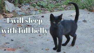 Skinny Black Kitten Wants Food